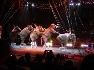 circus elephant parade
